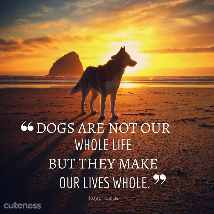 Inspirational Pet Quotes: 25 Best Images About Pet Quotes On Pinterest