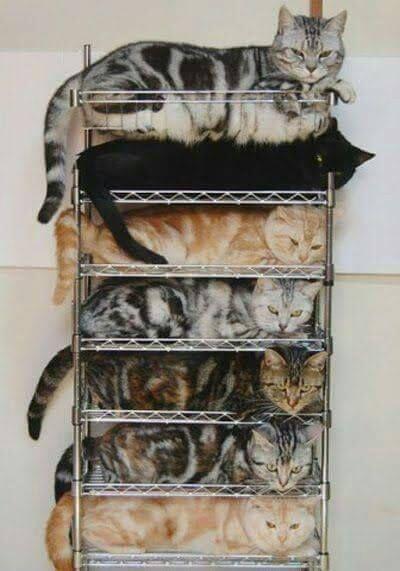 Kattenflat  jhona Rivera originally shared:   Big cats