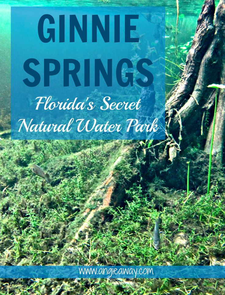 There's something in the water... at Ginnie Springs, Florida.