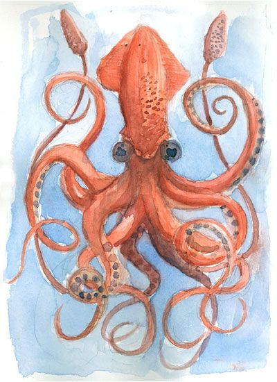 squid watercolor