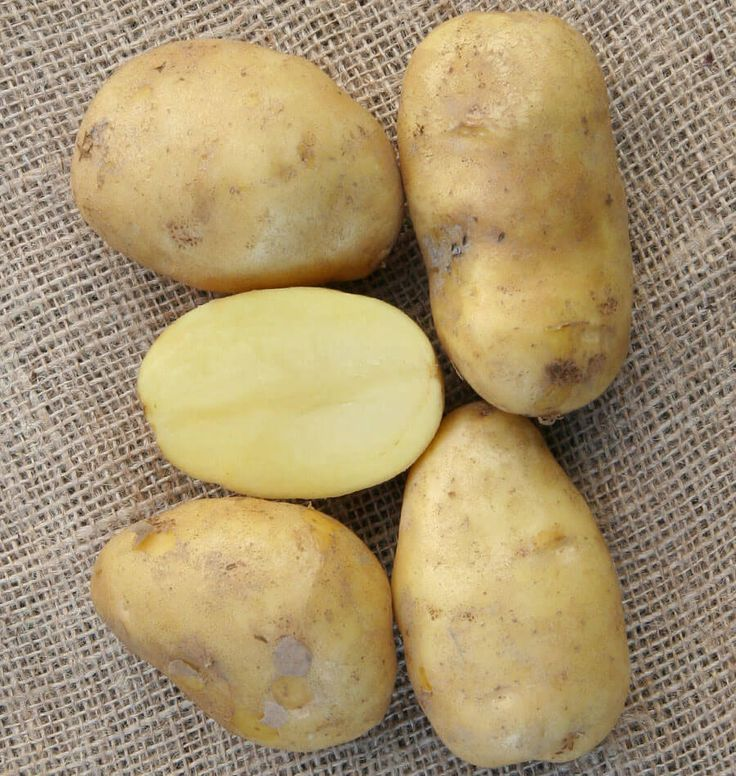 Sieglinde Organic Seed Potatoes are an early season potato with oblong, slightly-flattened, smooth tubers with clear yellow skin. German Butter Potatoes.