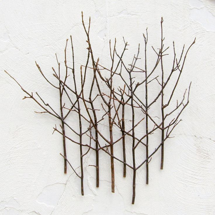 Twig Wall Art twig wall art | powder room | pinterest | forests, the o'jays and
