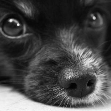 Welcher Hund passt zu mir? – Überlegungen vor der Anschaffung