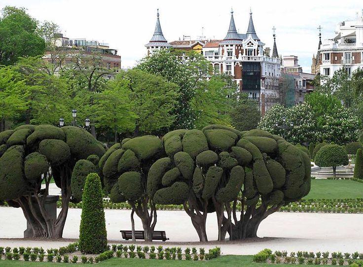 M s de 1000 ideas sobre rboles enanos en pinterest - Arbustos enanos para jardin ...