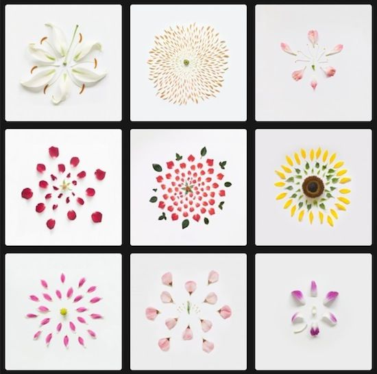 Exploded Flowers Fong Qi Wei