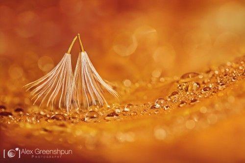 dancing-in-the-rain-serafim-900