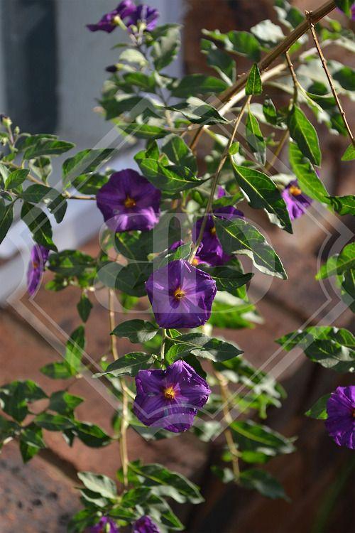 Purple flower_Bianca Duvenhage (photography).