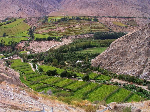 Valle del Elqui. Beautiful vineyards, panoramic views under clear skies. Where Pisco is made.