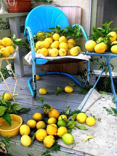 Blue with Yellow chair with lemons