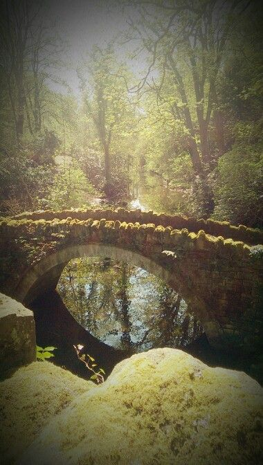 Jesmond Dene. Many hours spent here as a child.  Felt like a magical place.