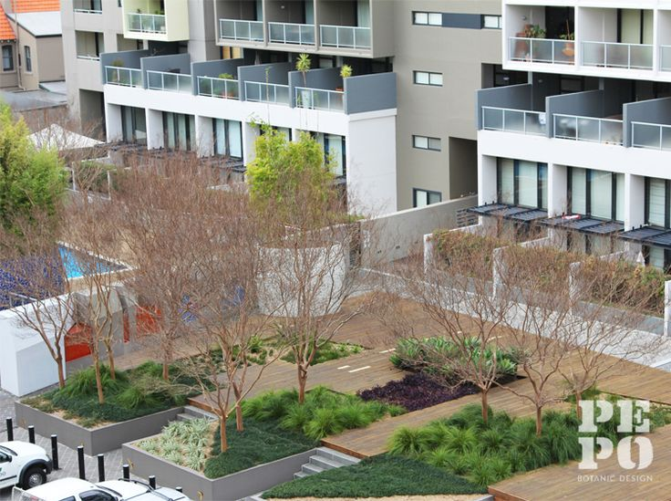 Communal courtyard gardens for multi-residential apartments The Hudson, Alexandria Landscape Architect: JMD Design Maintained by Pepo Botanic Design