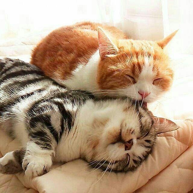 """Gefällt 3,811 Mal, 7 Kommentare - I Love Kittens and Cats"""""""