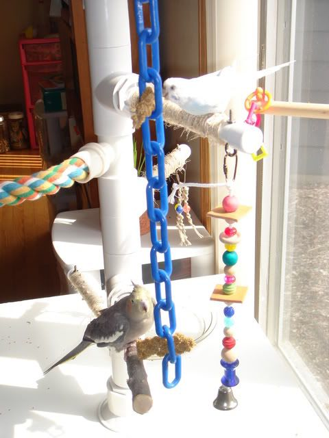 DIY: Bird perch/play gym made from PVC. Lots of different textures and materials to keep everybody interested