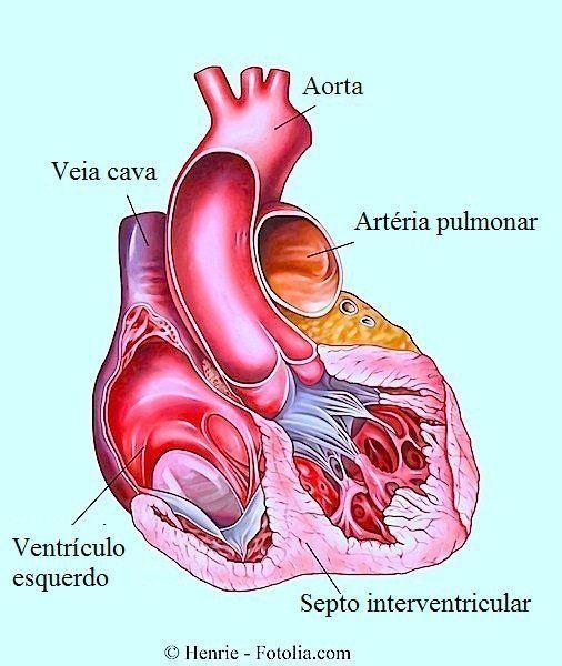 O batimento cardíaco normal indica a frequência de batimento por minuto que deve haver o coração. Uma freqüência cardíaca de 60-100 BPM é considerada normal