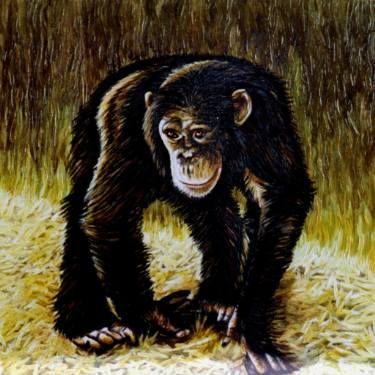 "Saatchi Art Artist Dan Civa; Painting, ""Walking chimpanzee"" #art"