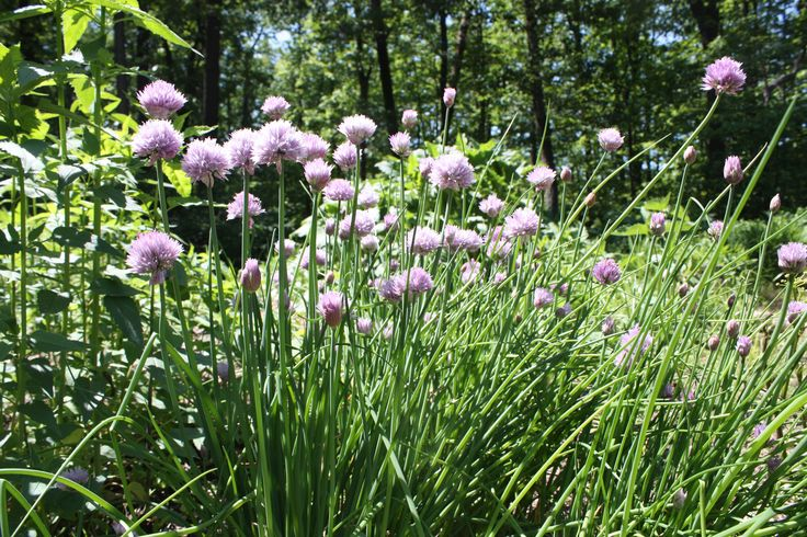 Keystone Wildflowers grows native perennial wildflowers, grasses and ferns for natural landscaping and wildlife habitats.