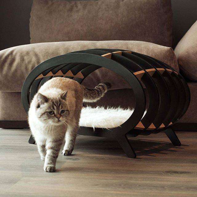 Кушетка STRIPE для кошек и маленьких собак. Съемная подстилка на липучках. Собственное интерьерное пространство для your fluffy resident  Материалы - березовая фанера, черная эмаль. Подстилка - искусственный мех. Дизайн Pettel. Сделано в России 11500р.- Модель  @zima_zimochka За съемку спасибо @fox_kuzma  Заказывайте  кушетку STRIPE в интернет магазине pettel.ru (ссылка в профиле) или в комментариях/ direct messages