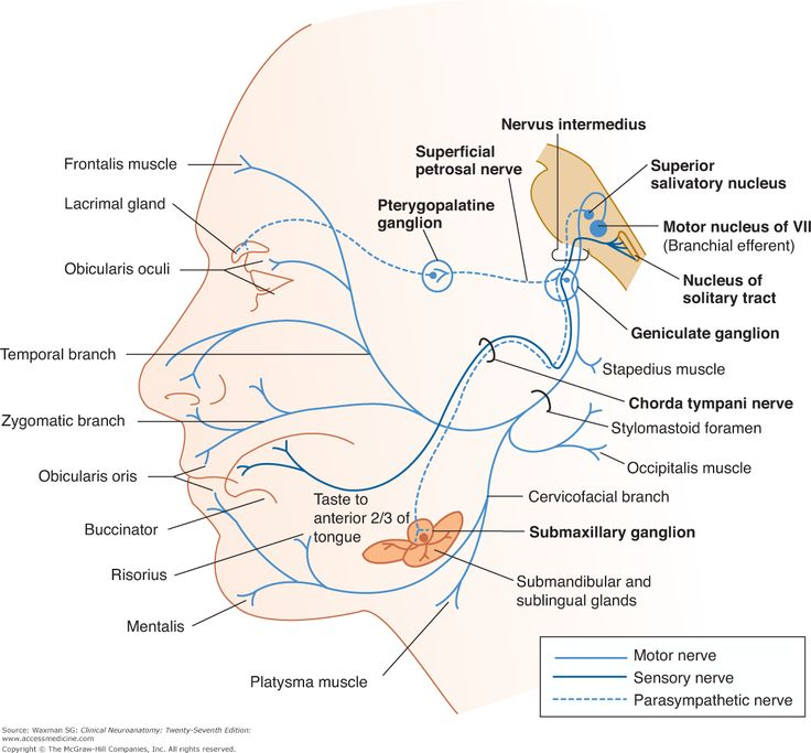 7 best Anatomy images on Pinterest | Anatomy, Facial nerve and ...