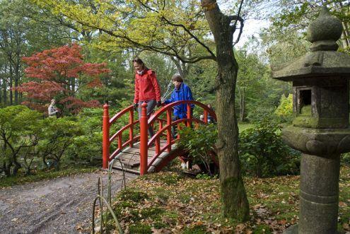 Japanese Garden in Clingendael Park in The Hague
