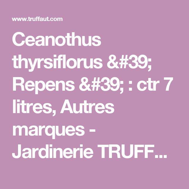 Ceanothus thyrsiflorus ' Repens ' : ctr 7 litres, Autres marques - Jardinerie TRUFFAUT