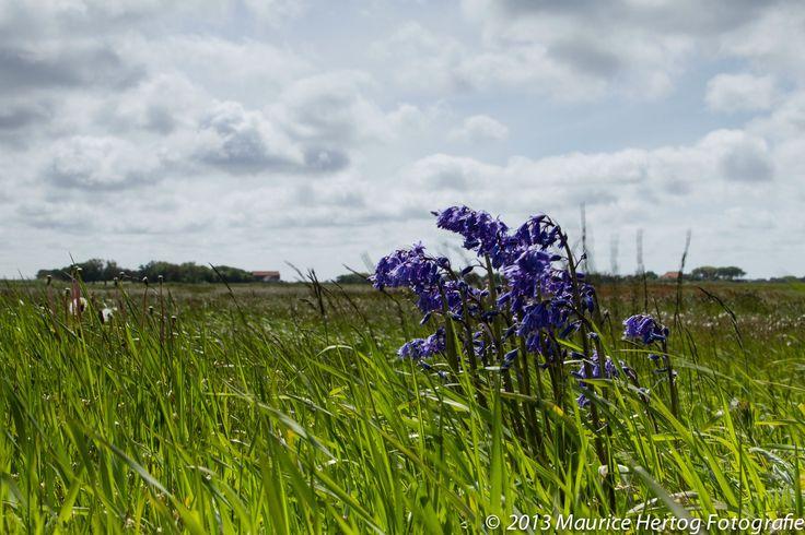 Lentebloeier op de Lancasterdijk, Texel