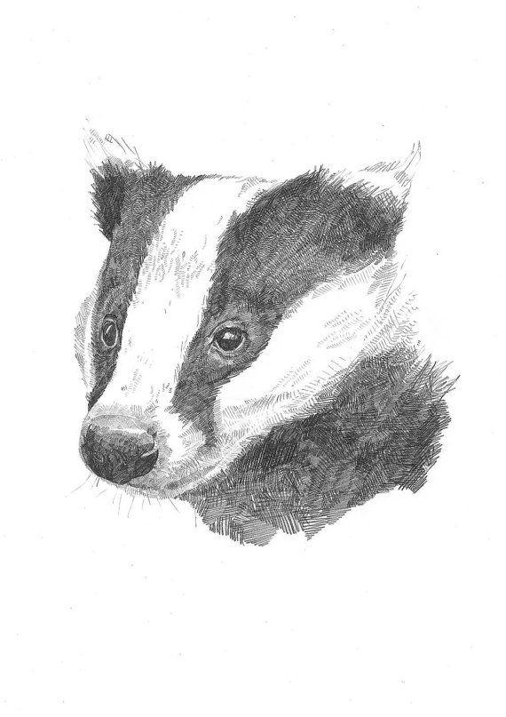 A5 Print Sleepy Badger Pencil Drawing by HannahLongmuir on Etsy