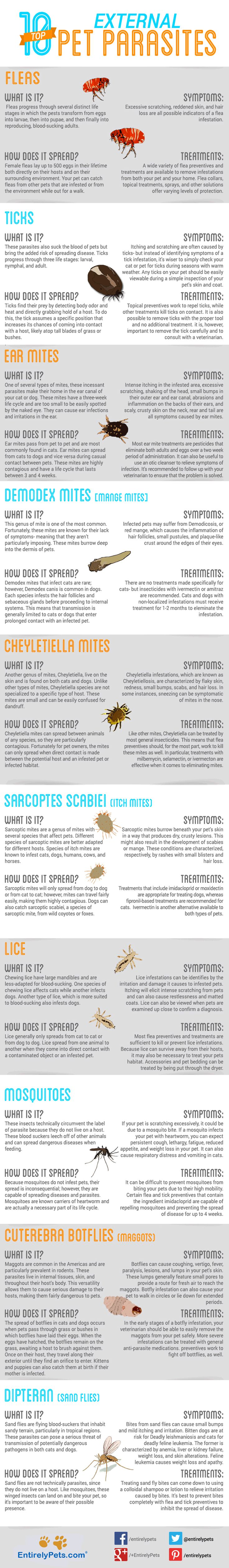 There are many parasites that pose a threat to your pet's health. Though many parasites are  internal , meaning they live inside your pet, others live on the outside of your cat or dog. To help you identify and treat some of the most common external pet parasites, we've complied this list of ten common external parasites. We hope this infographic helps you keep your pets safe from these pesky pests and hope that you SHARE it to help others do the same!        <a href=`http://entirelypets....