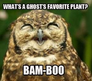 What's a ghost's favorite plant?  Bam-Boo