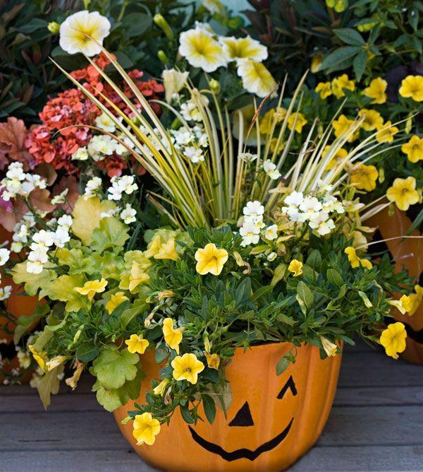 pumpkin lantern plants