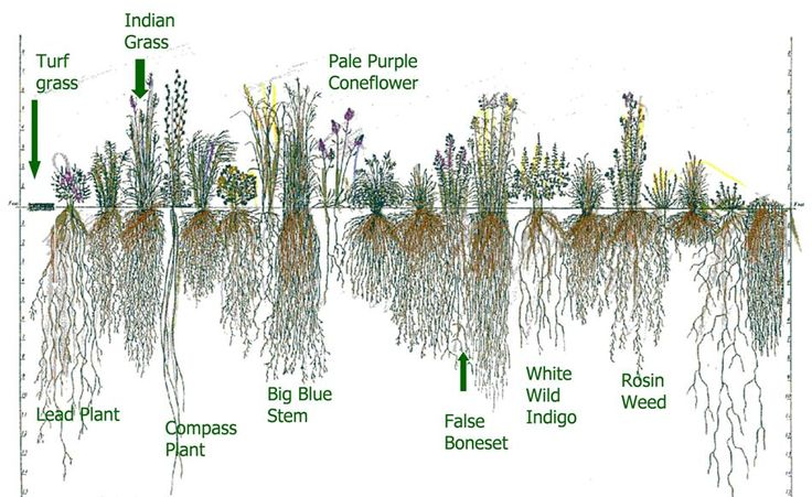 plants for erosion control - Google Search