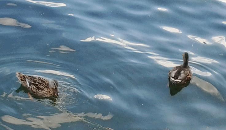 """Uccelli sul lago...non i """"soliti"""" gabbiani"""