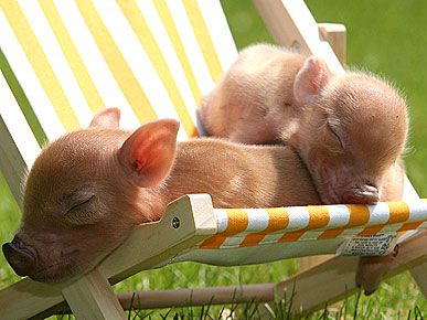 I'm dying of happiness. So much cuteness in this picture...named Bacon and Pork Chop :)