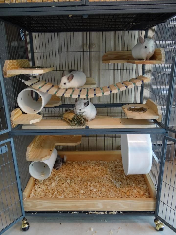 perfect chinchilla setup, adalyn would love this. possible birthday present?