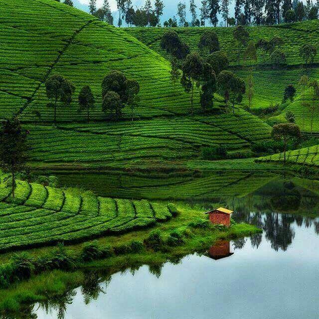 Pangalengan, Bandung, West Java. Felgra Photography