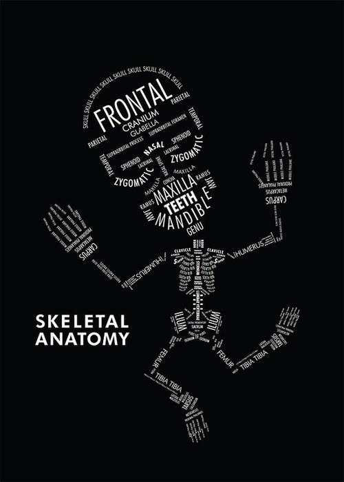 Skeletal Anatomy - Anatomie eines Skeletts