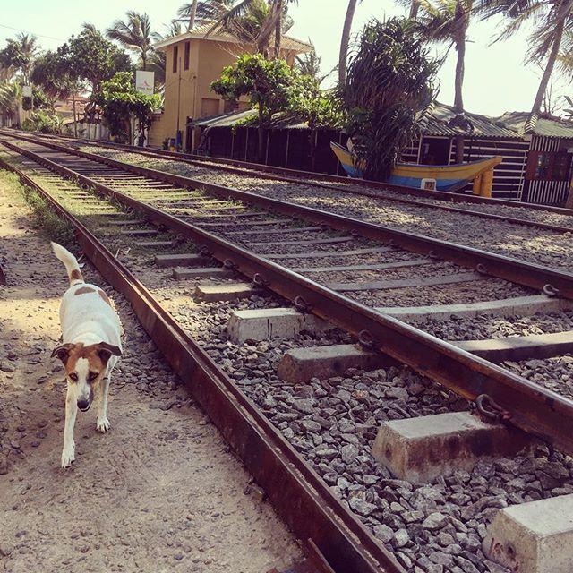 【uakira75】さんのInstagramをピンしています。 《#🚃#⛱#🐕#🛤 #dogstagram#dog#train#railway#beach#beachside#ocean#railwaylife#standbyme#ocean#srilanka##dailylife#犬#電車#鉄道#ビーチ#海#線路#鉄道のある風景#線路のある風景#スリランカ#シンハラ語#日常#🇱🇰》