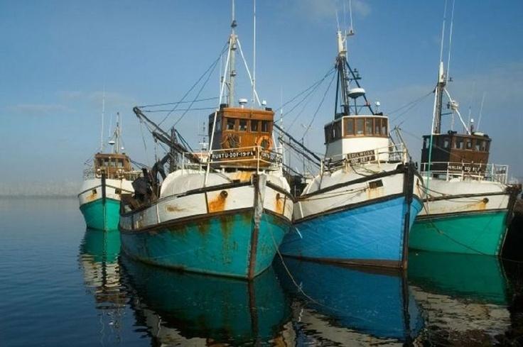Gansbaai boats:Great White Shark Tours