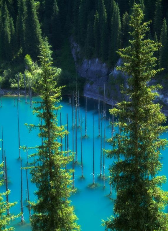 Kaindy Lake is an idyllic mountain lake in Kazakhstan's portion of the Tian Shan Mountains. The lake is famous for the number of dead and bleached spruce trees that stick out of the water – remnants of the trees that were flooded when the lake was formed. The trees, toge