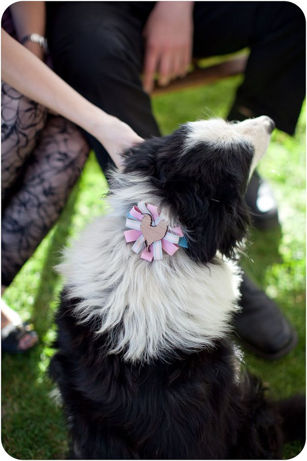 Beautiful black and white, wrapped up in a pink bow!