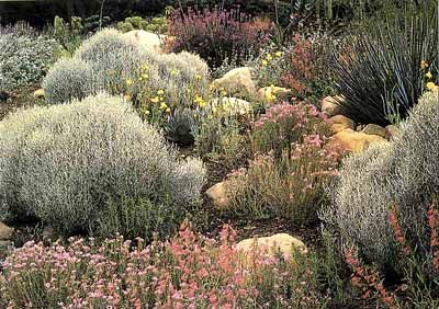 47 best images about drought tolerant landscaping on for Southern california native plants