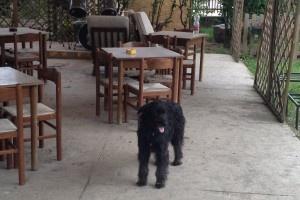 I TIGLI, il primo Pets Cafè in Italia http://www.petsparadise.it/altri/i-tigli-il-primo-pets-cafe-in-italia/