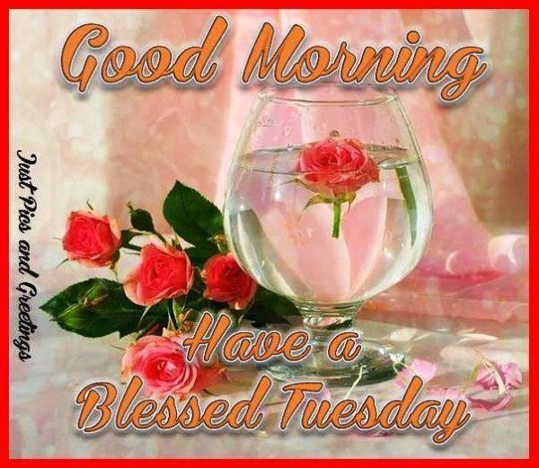 Good Morning, Have A Blessed Tuesday good morning tuesday tuesday quotes good morning quotes happy tuesday good morning tuesday quotes happy tuesday morning tuesday morning facebook quotes tuesday image quotes happy tuesday good morning