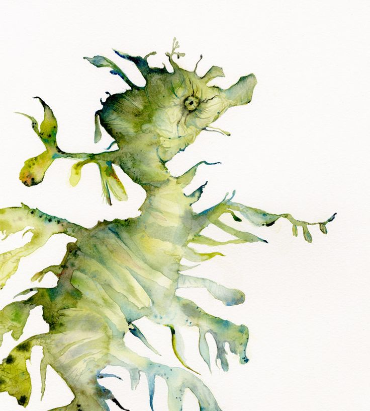 Leafy Sea Dragon- Large Archival Print of watercolor. $40.00, via Etsy.