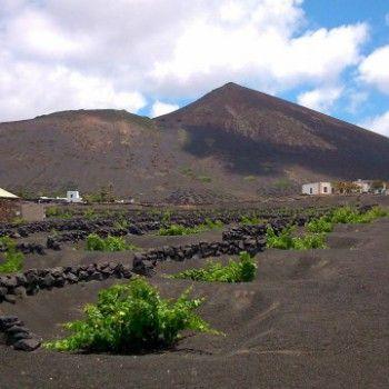 Georganiseerde winetasting wandeling op Lanzarote. Bekijk het op AdventureTickets.nl