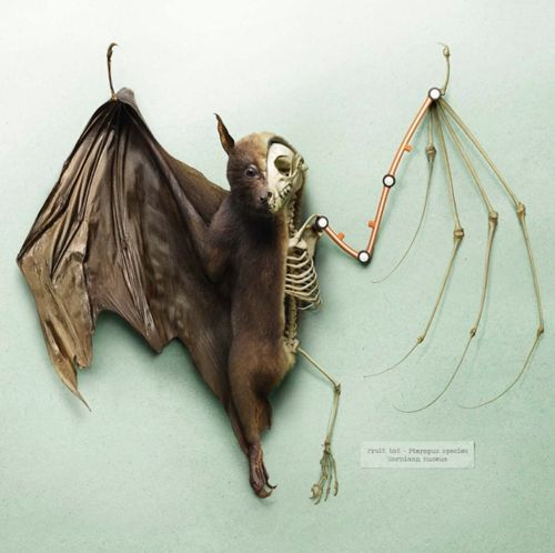 Fruit bat --- I can't stop looking.