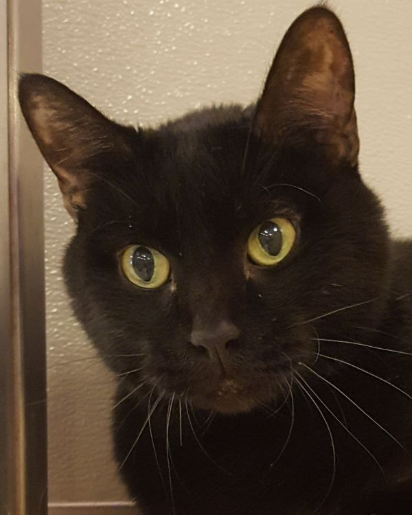 Cats For Adoption Petfinder Cat Adoption Cats Pets
