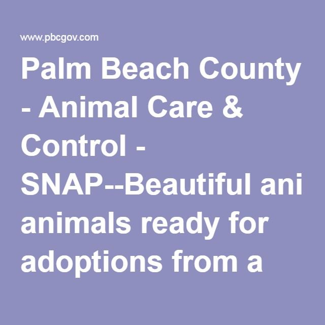 Palm Beach County Animal Shelter Adoption