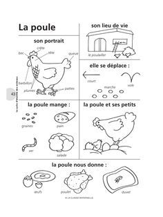 French Words about a Poule . Chicken (Poultry)