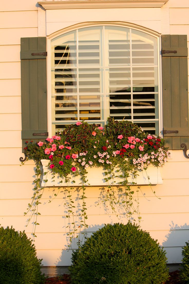 Mission : Find Someone to Build Me Some Simple Wooden Window Boxes for the Back of the House & The Shed!