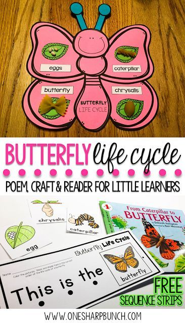Teach your Kindergarten and primary students all about the life cycle of a butterfly with this butterfly life cycle poem, butterfly craft and FREE butterfly life cycle sequence strips!  They are the perfect way to bring a little science into your spring a